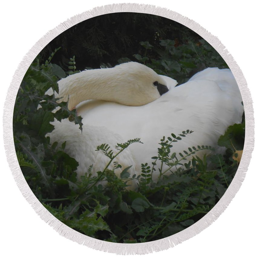 Trumpeter Swan Round Beach Towel featuring the photograph Resting Swan by LKB Art and Photography