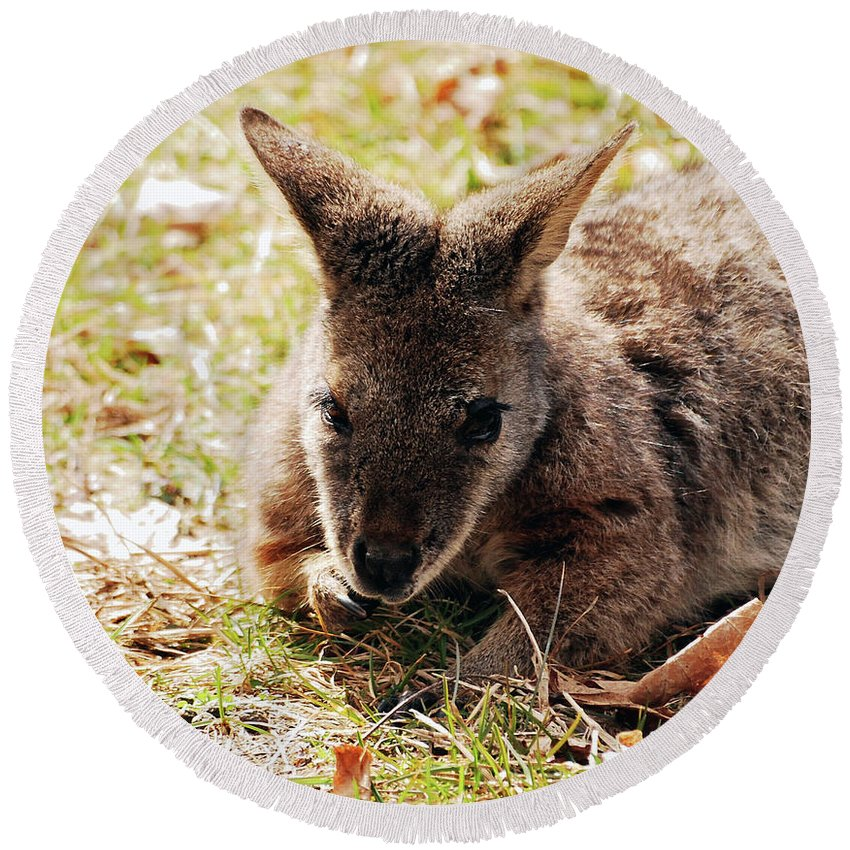 Wallaby Round Beach Towel featuring the photograph Resting Wallaby by Lori Tambakis