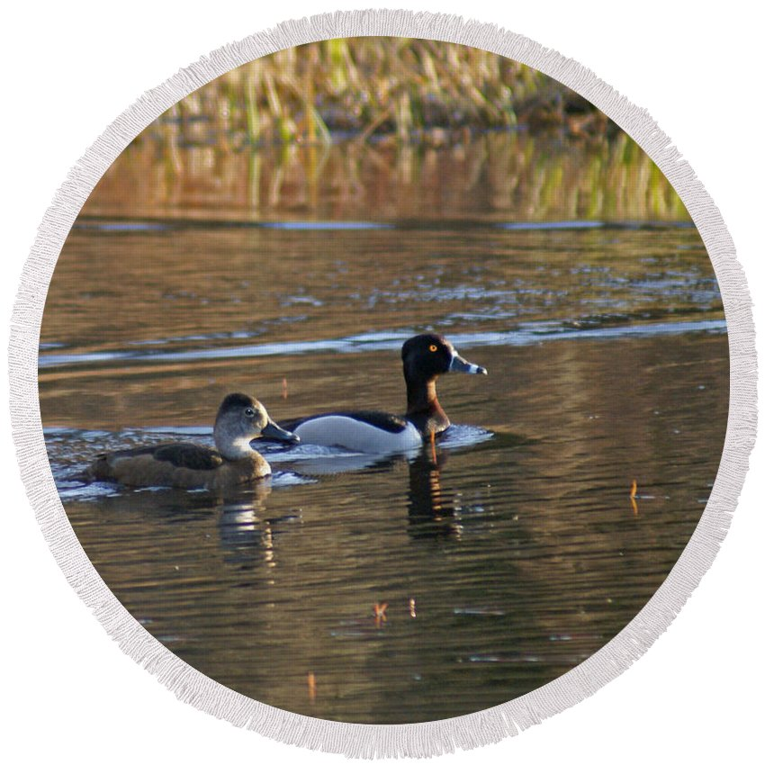 Duck Round Beach Towel featuring the photograph Ring Necked Duck by Heather Coen