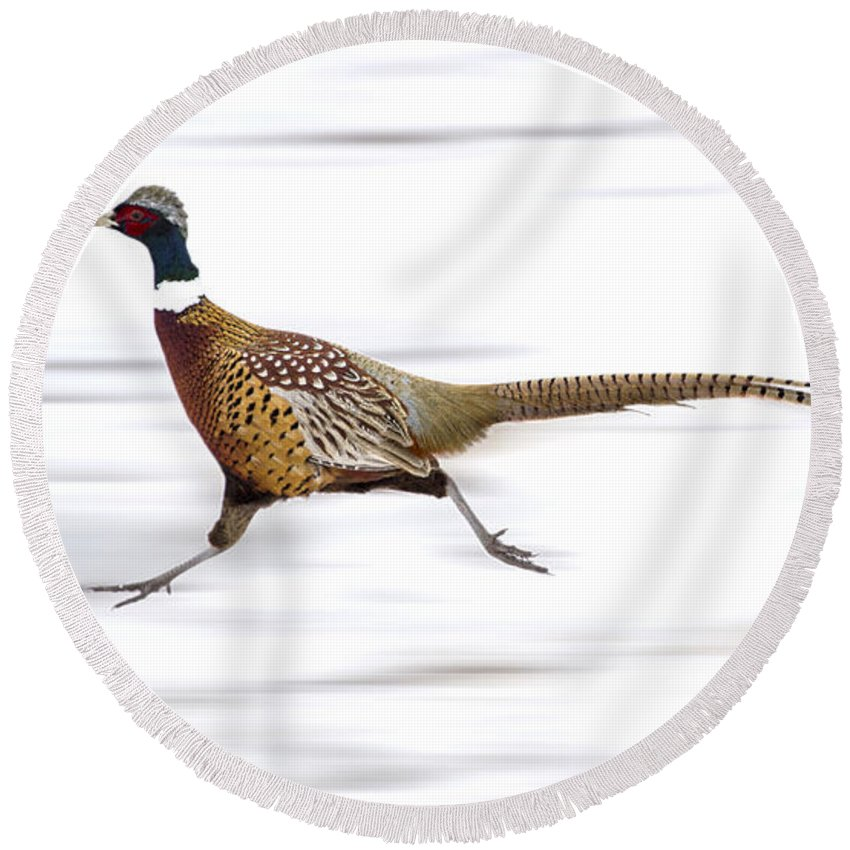 Pheasant Round Beach Towel featuring the photograph Ring Necked Pheasant by Mark Duffy