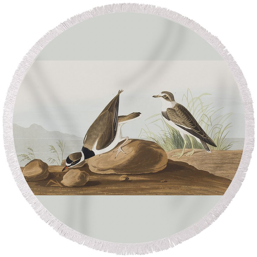 Plover Round Beach Towel featuring the painting Ring Plover by John James Audubon