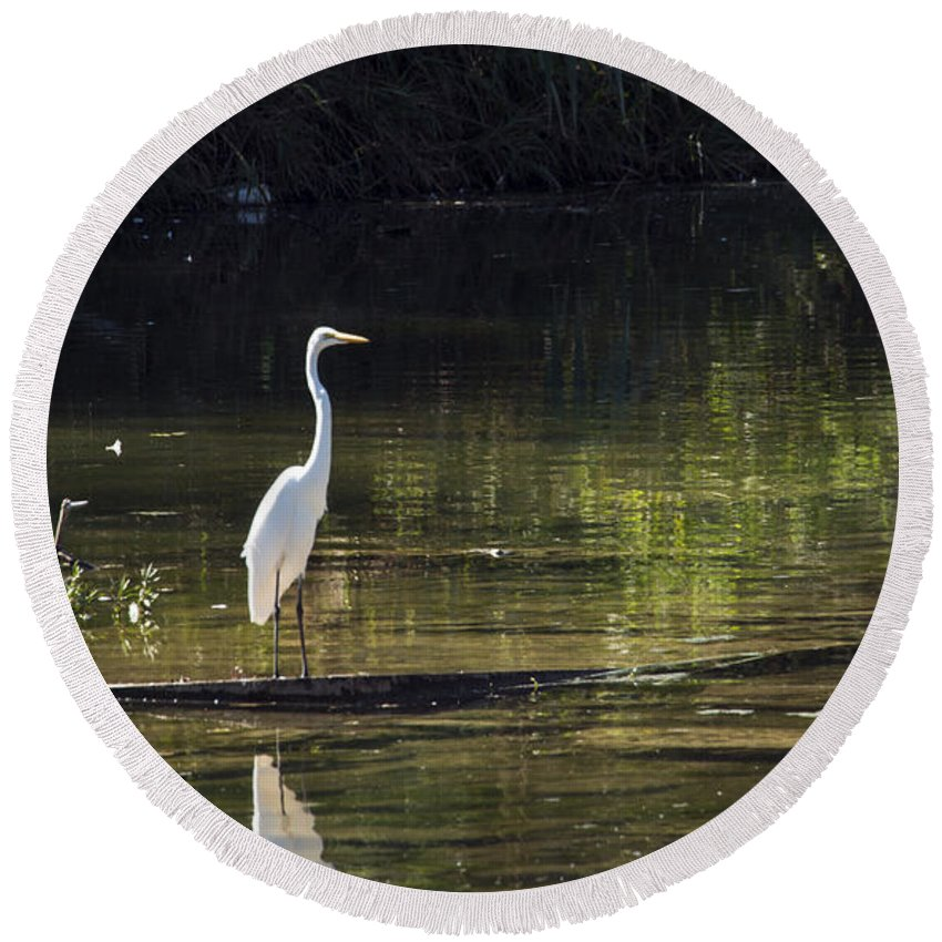 Georgetown Texas Williamson County Egret Egrets Bird Birds Tree Trees Creature Creatures San Gabriel River Rivers Water Landscape Landscapes Reflection Reflections Waterscape Waterscapes Round Beach Towel featuring the photograph River Wader by Bob Phillips