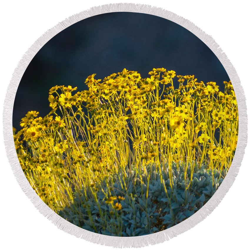 Yellows Round Beach Towel featuring the photograph Roadside Flowers by Stephen Whalen