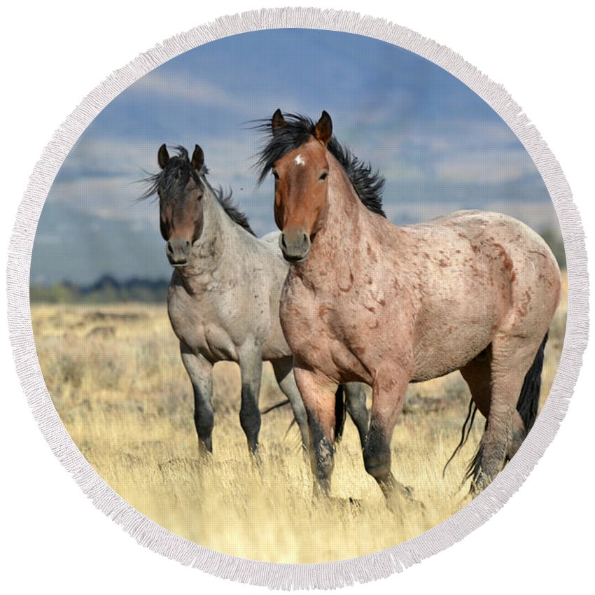 Stallions Round Beach Towel featuring the photograph Roans by Out West Originals