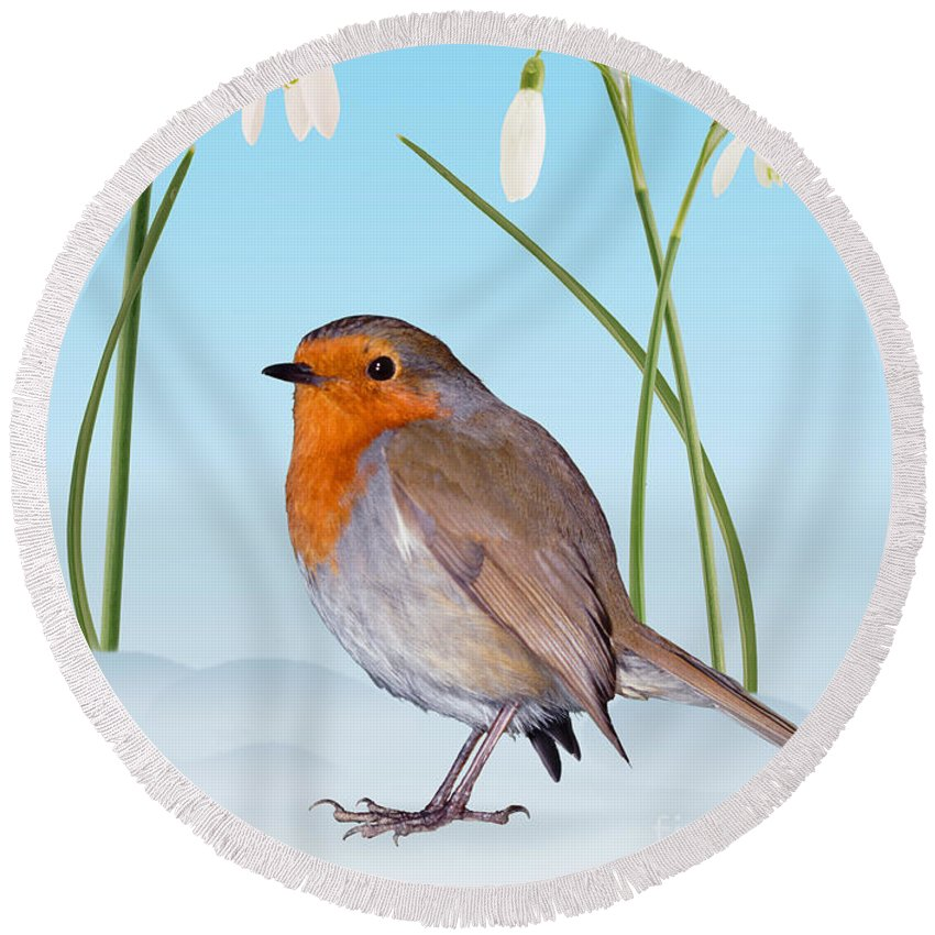 Erithacus Rubecula Round Beach Towel featuring the photograph Robin And Cold Snowdrops by Warren Photographic