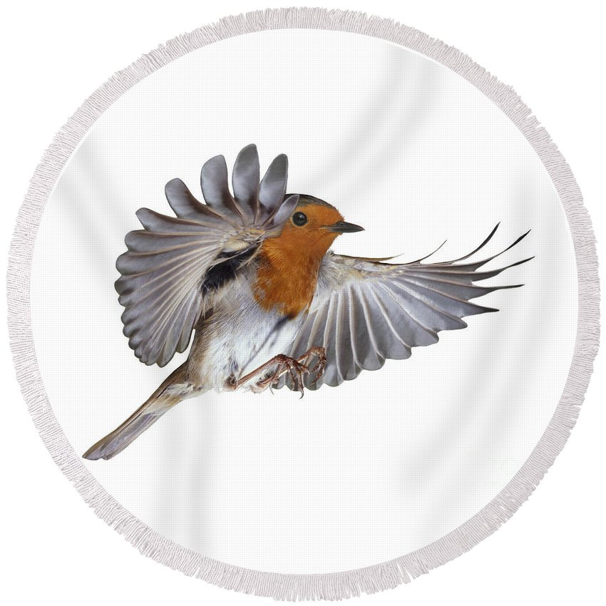 European Robin Round Beach Towel featuring the photograph Robin Flying by Warren Photographic