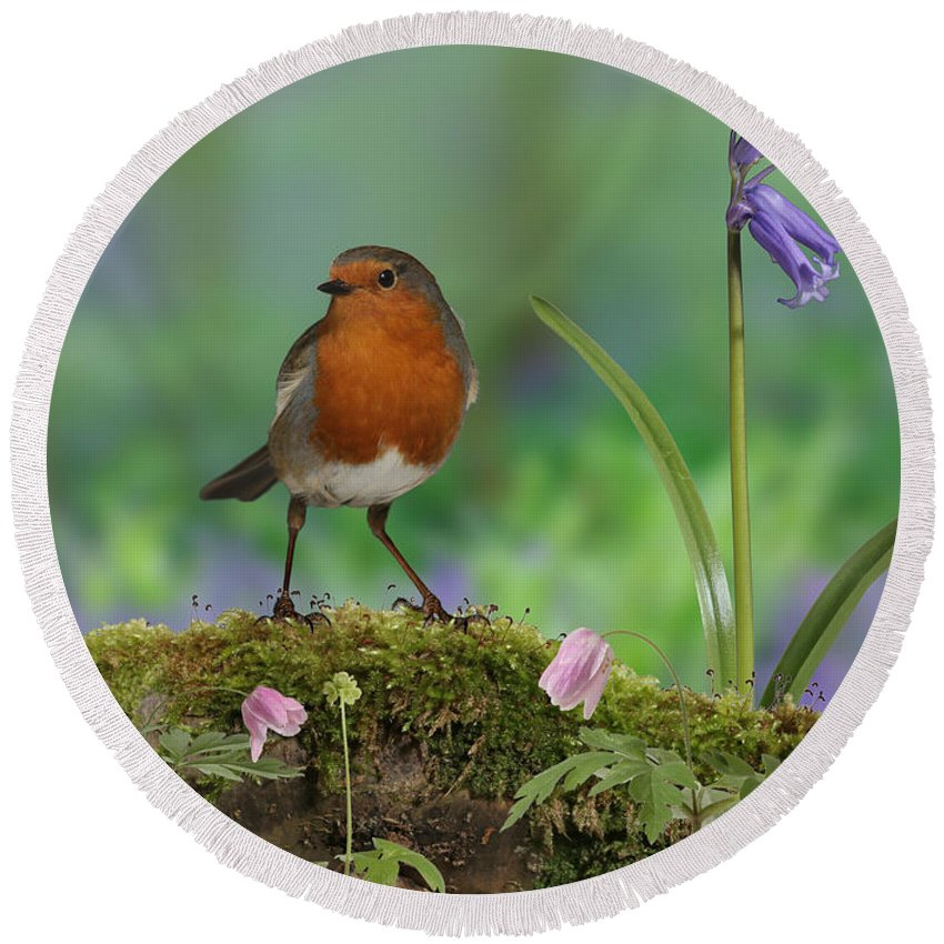 Wood Anemone Round Beach Towel featuring the photograph Robin In Spring Wood by Warren Photographic