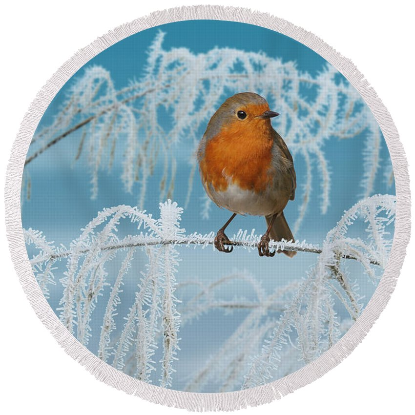 European Robin Round Beach Towel featuring the photograph Robin On Frosty Grass by Warren Photographic