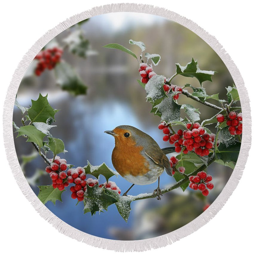 European Robin Round Beach Towel featuring the photograph Robin On Holly Branch by Warren Photographic