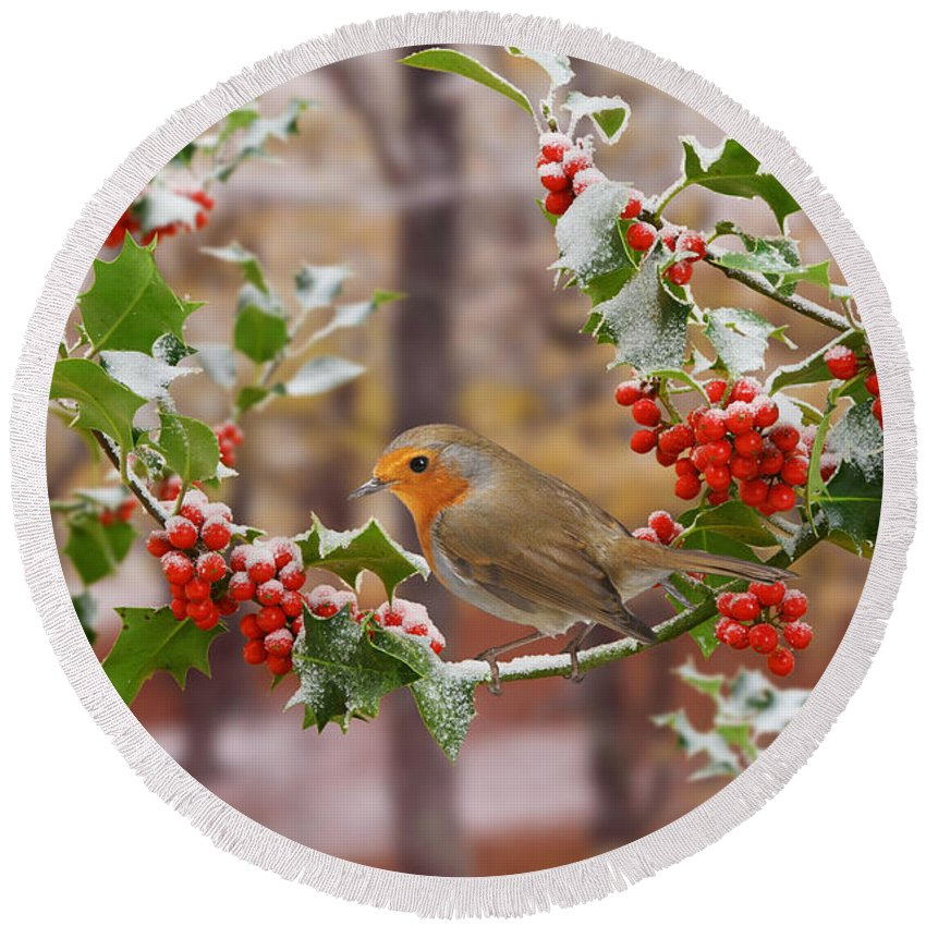 European Robin Round Beach Towel featuring the photograph Robin On Holly Twigs by Warren Photographic