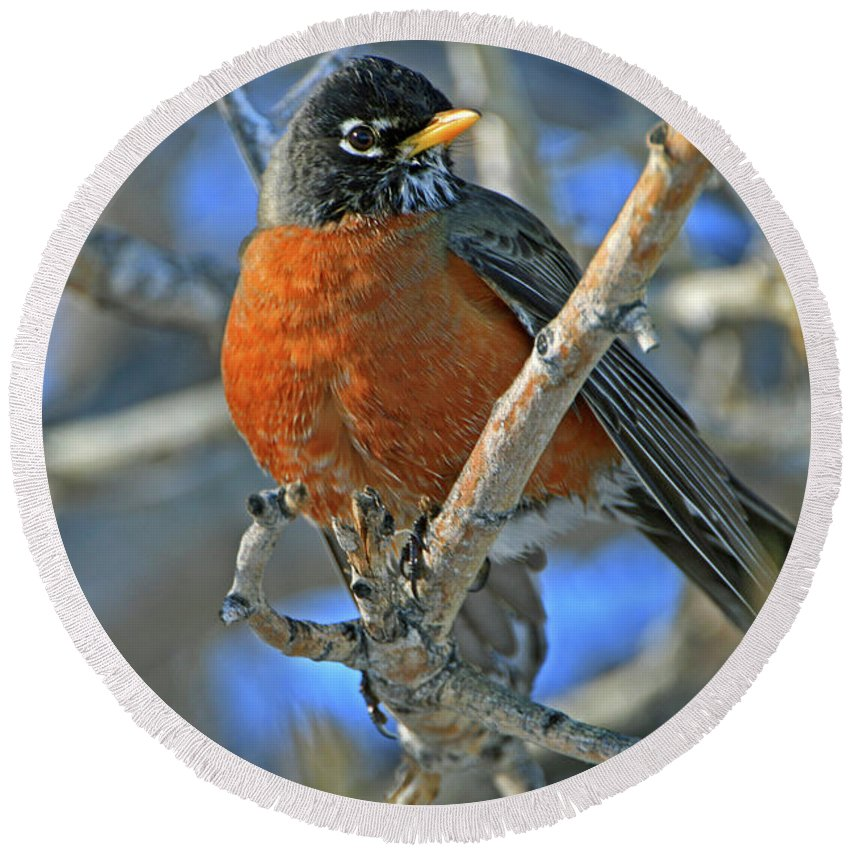 Robin Round Beach Towel featuring the photograph Robin by Scott Mahon