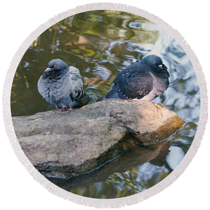 Dove Round Beach Towel featuring the photograph Rock Doves by Asbed Iskedjian