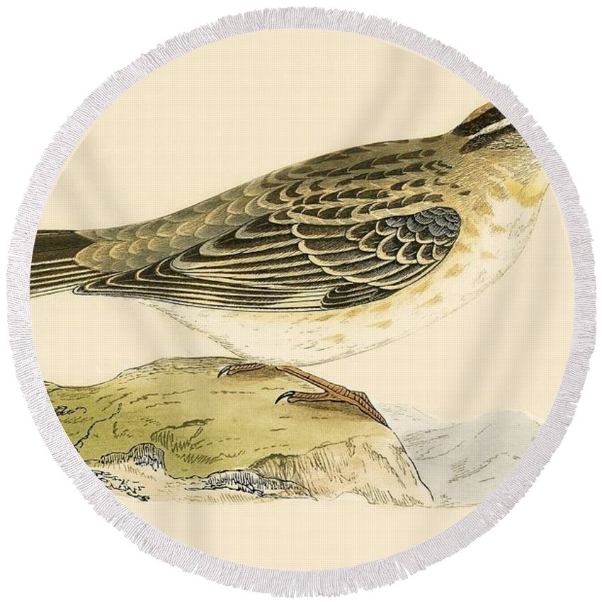 Sparrow Round Beach Towels