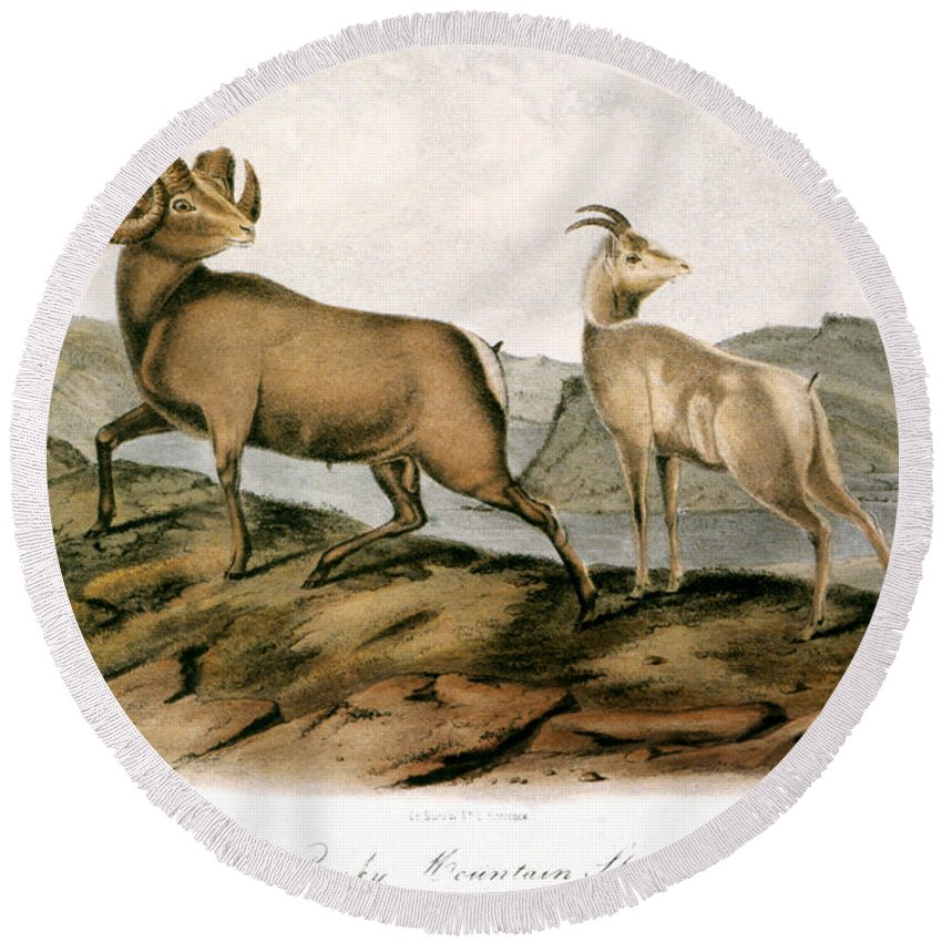 1846 Round Beach Towel featuring the photograph Rocky Mountain Sheep, 1846 by Granger