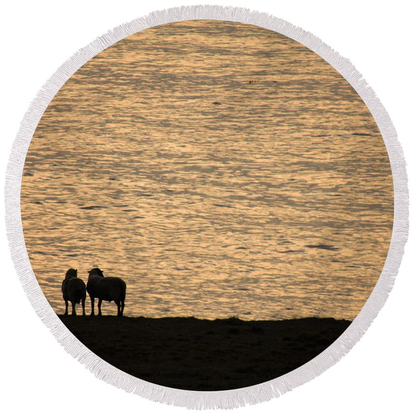 Sheep Round Beach Towel featuring the photograph Romancing The Sheep by Donna Blackhall