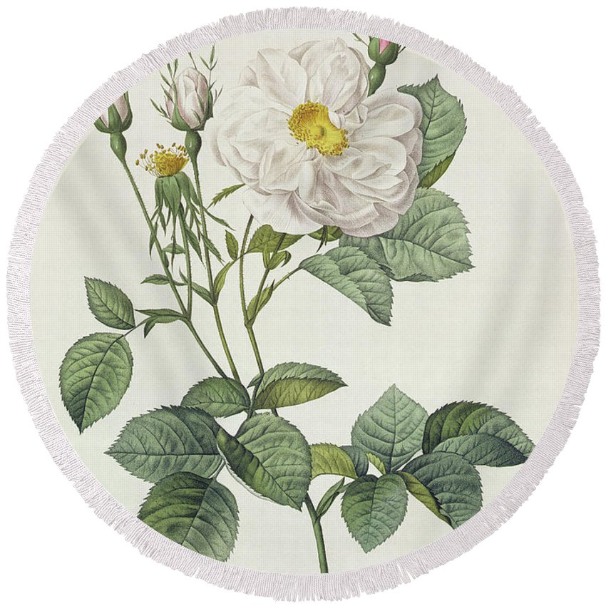 Rosa Round Beach Towel featuring the drawing Rosa Alba Foliacea by Pierre Joseph Redoute