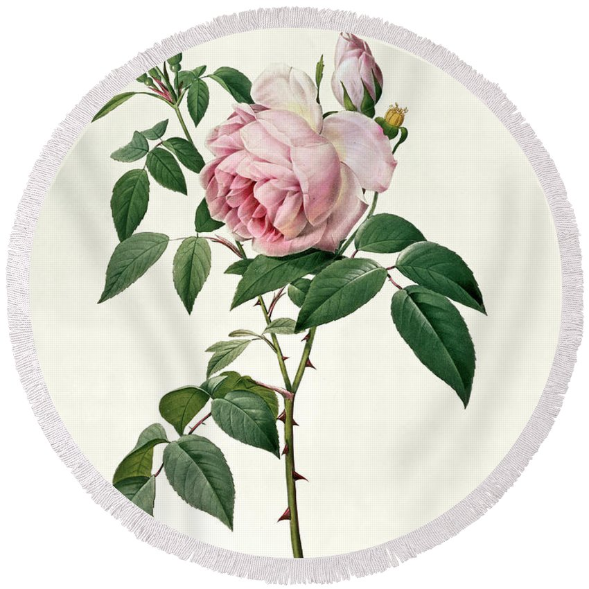 Rosa Round Beach Towel featuring the drawing Rosa Chinensis And Rosa Gigantea by Joseph Pierre Redoute