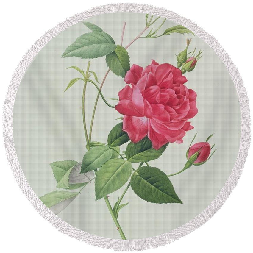 Red Round Beach Towel featuring the drawing Rosa Indica Cruenta by Pierre Joseph Redoute
