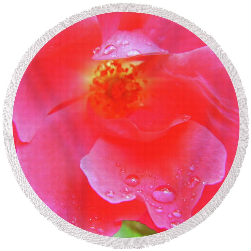Roses Round Beach Towel featuring the photograph Rose And Raindrops by D Hackett