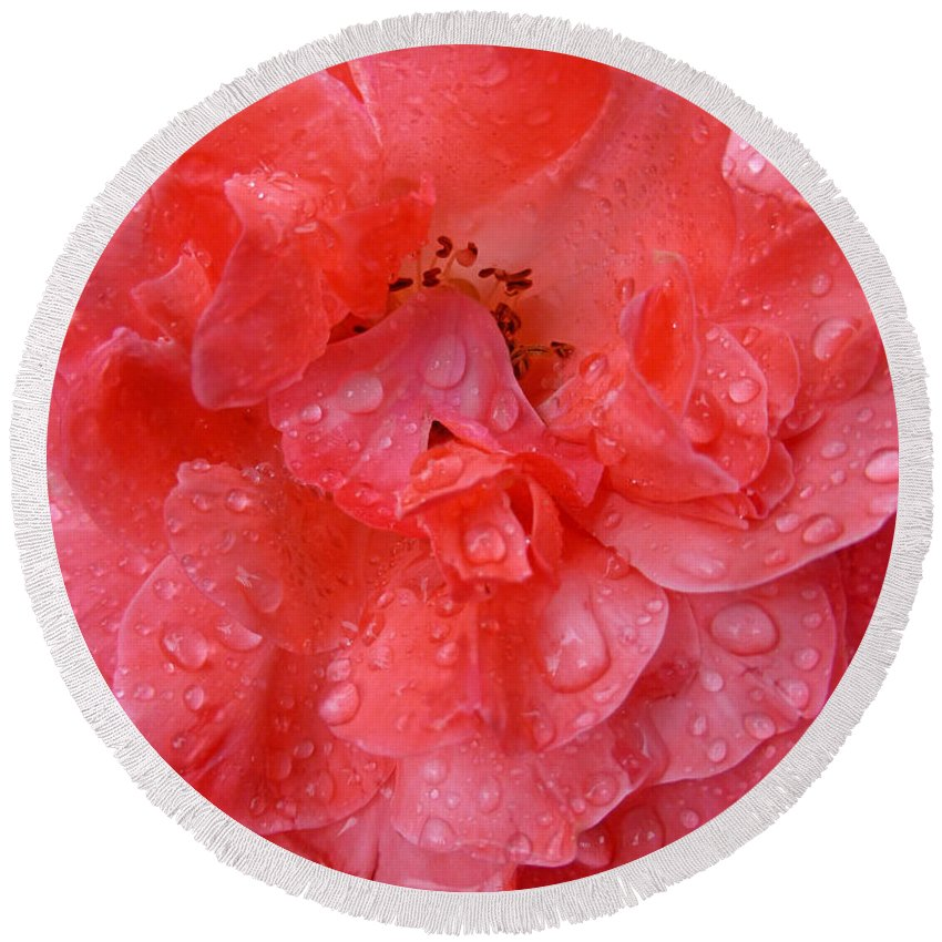 Water Round Beach Towel featuring the photograph Rose Drops by Claudia Goodell