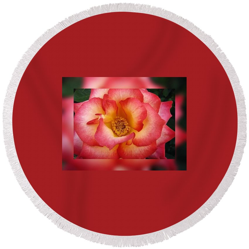 Roses Round Beach Towel featuring the digital art Rose In Reflection by Linda McAlpine