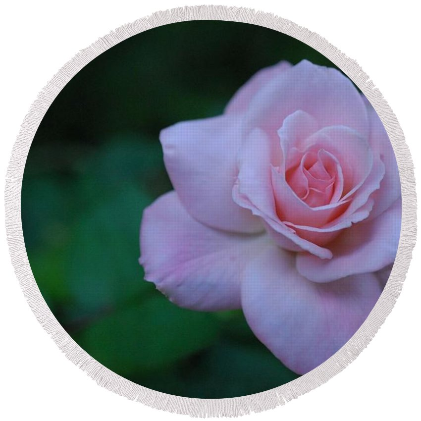 Pink Round Beach Towel featuring the photograph Rose by Stefani Smirnes