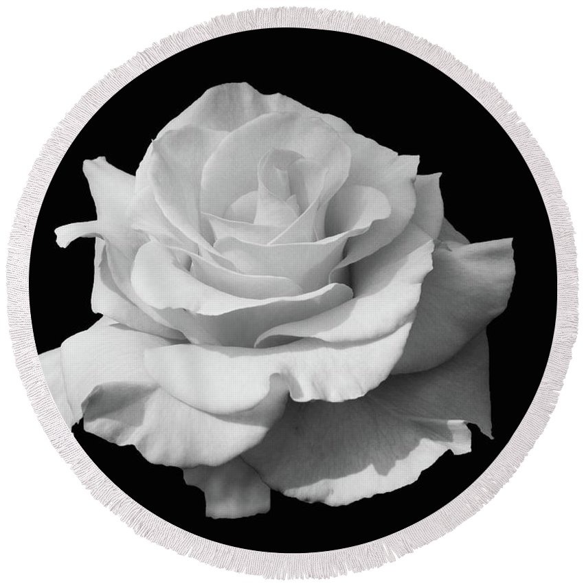 Flowers Round Beach Towel featuring the photograph Rose Unfurled In Black And White by Cindy Manero