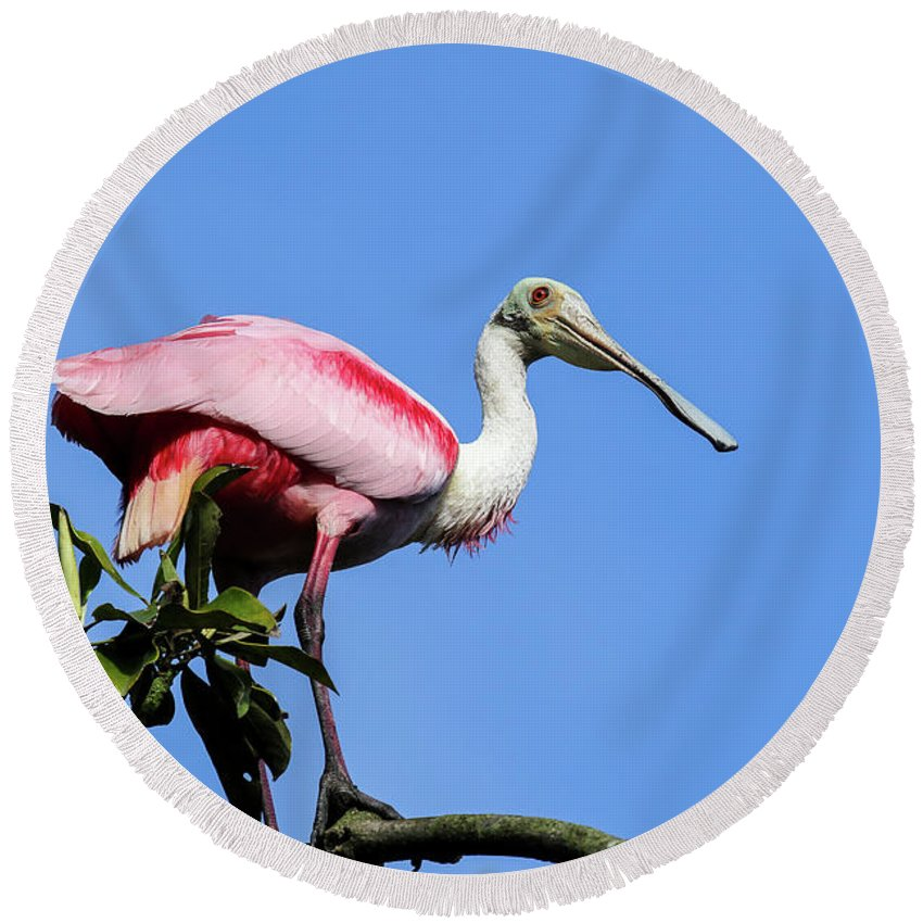 Round Beach Towel featuring the photograph Roseate Spoonbill by Laura Lien