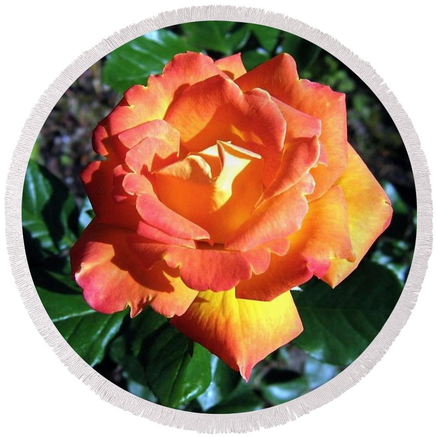 Rose Round Beach Towel featuring the photograph Roses 1 by Will Borden