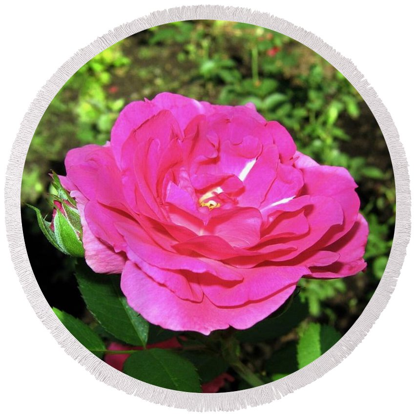 Rose Round Beach Towel featuring the photograph Roses 10 by Will Borden