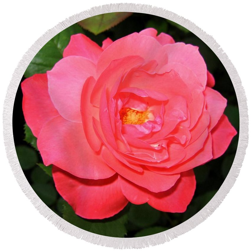 Rose Round Beach Towel featuring the photograph Roses 12 by Will Borden