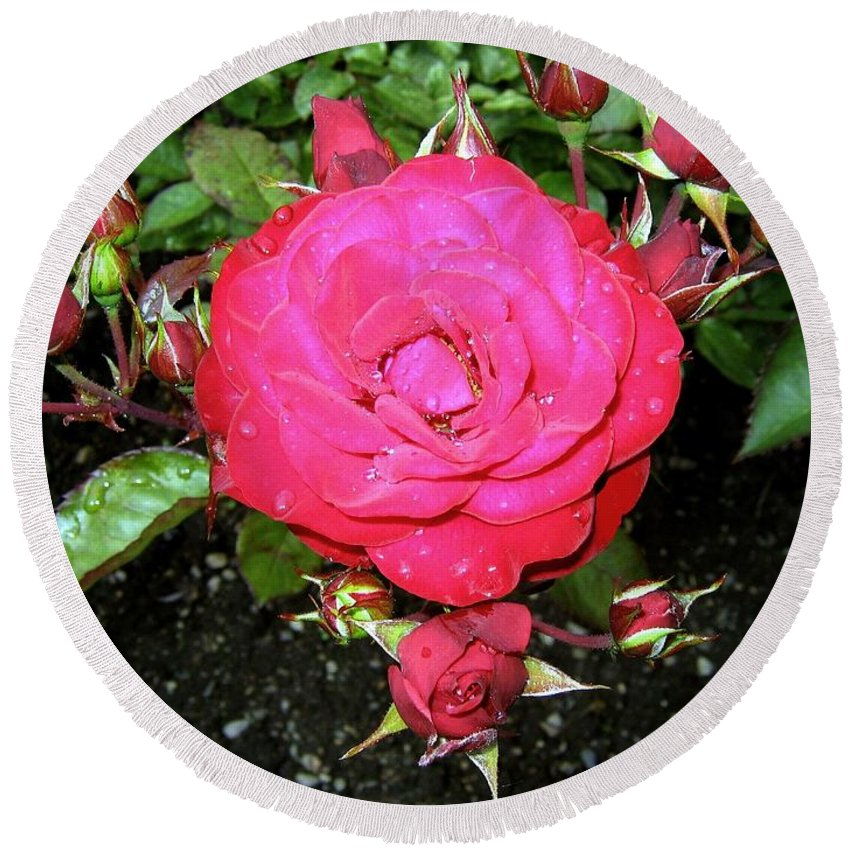 Rose Round Beach Towel featuring the photograph Roses 5 by Will Borden