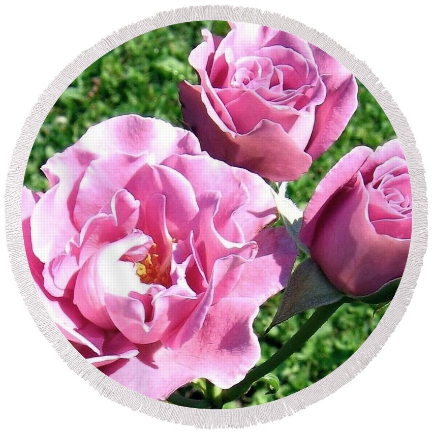 Roses Round Beach Towel featuring the photograph Roses 6 by Will Borden