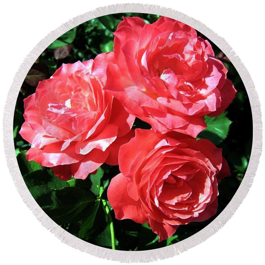 Roses Round Beach Towel featuring the photograph Roses 9 by Will Borden