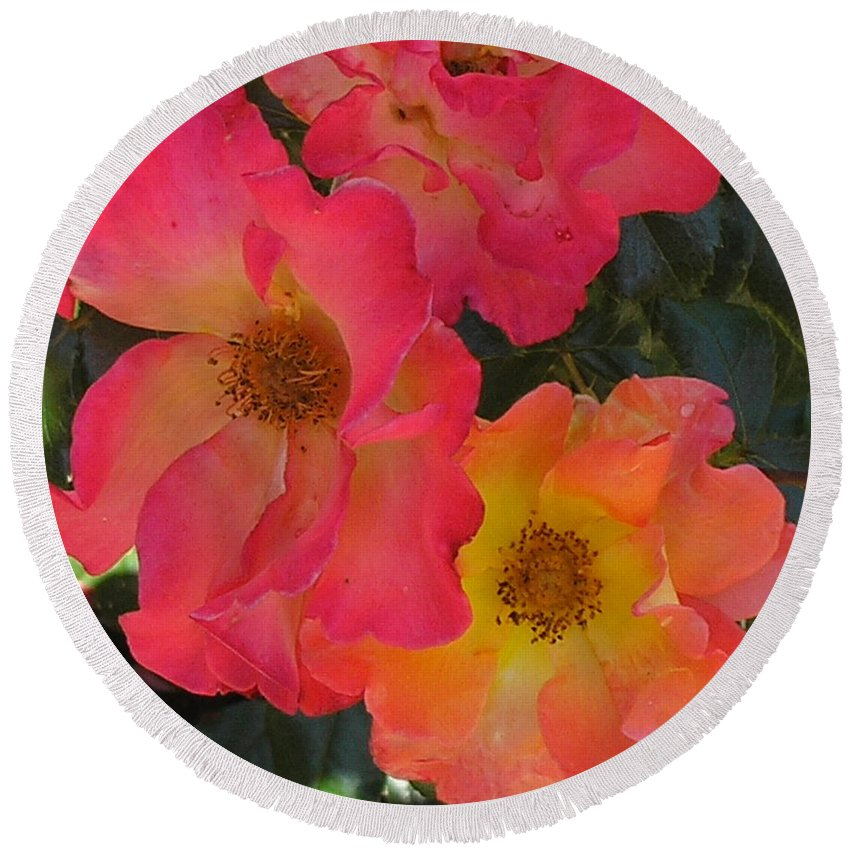Rose Round Beach Towel featuring the photograph Roses by Dean Triolo