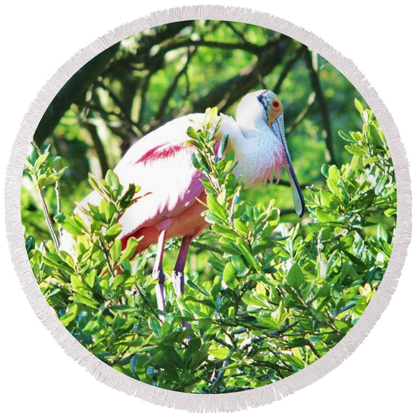 Pink Round Beach Towel featuring the photograph Rosette Spoonbill by Chuck Hicks