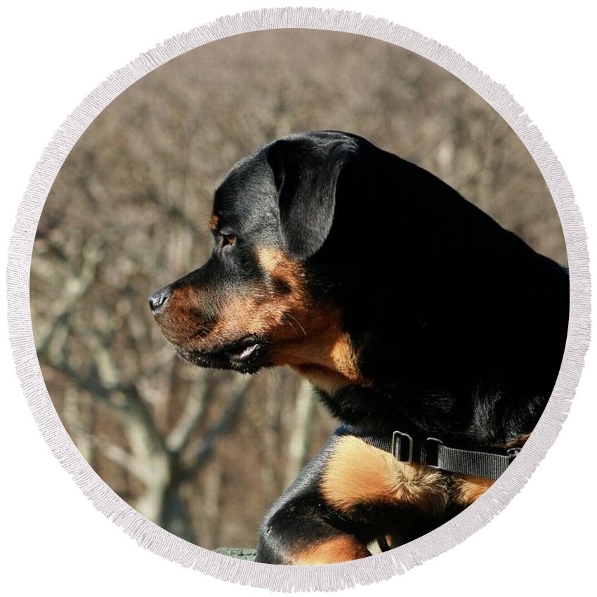 Rottweiler Round Beach Towel featuring the photograph Rottie Profile by Gregory E Dean