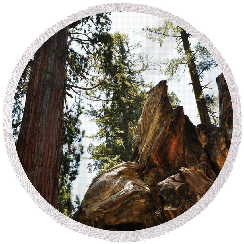Sequoia National Park Round Beach Towel featuring the photograph Round Meadow Giant Sequoia by Kyle Hanson