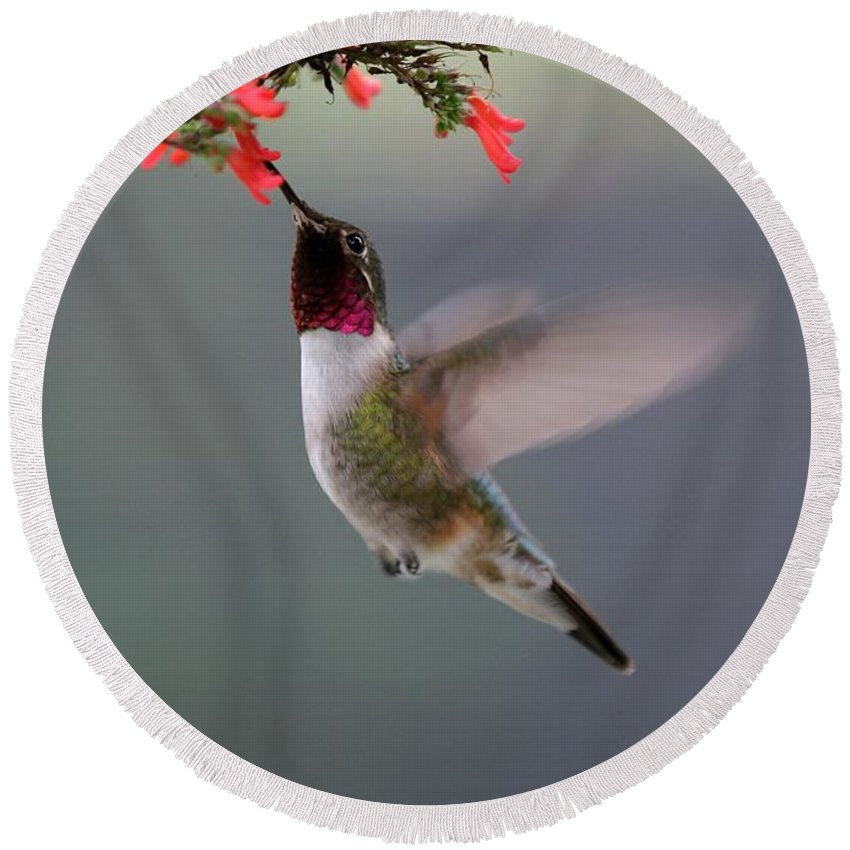 Hummingbird Round Beach Towel featuring the photograph Ruby Throated Hummingbird by Sabrina L Ryan