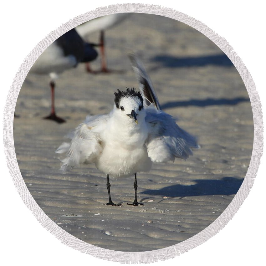 Gull Tern Round Beach Towel featuring the photograph Ruffled Feathers by Barbara Bowen