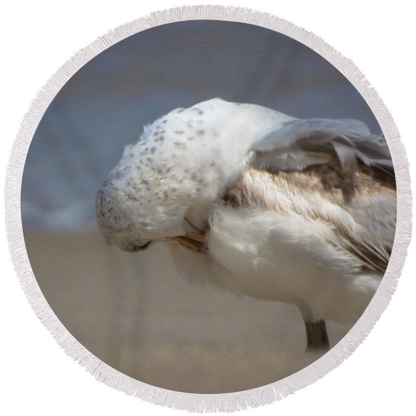 Colorado Macro Landscape Beach Bird Photography Round Beach Towel featuring the photograph Ruffled Feathers by Jeanette Wygant