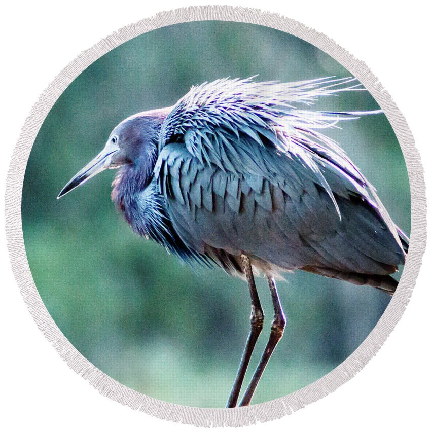 Reddish Egret Round Beach Towel featuring the photograph Ruffled Reddish by Norman Johnson