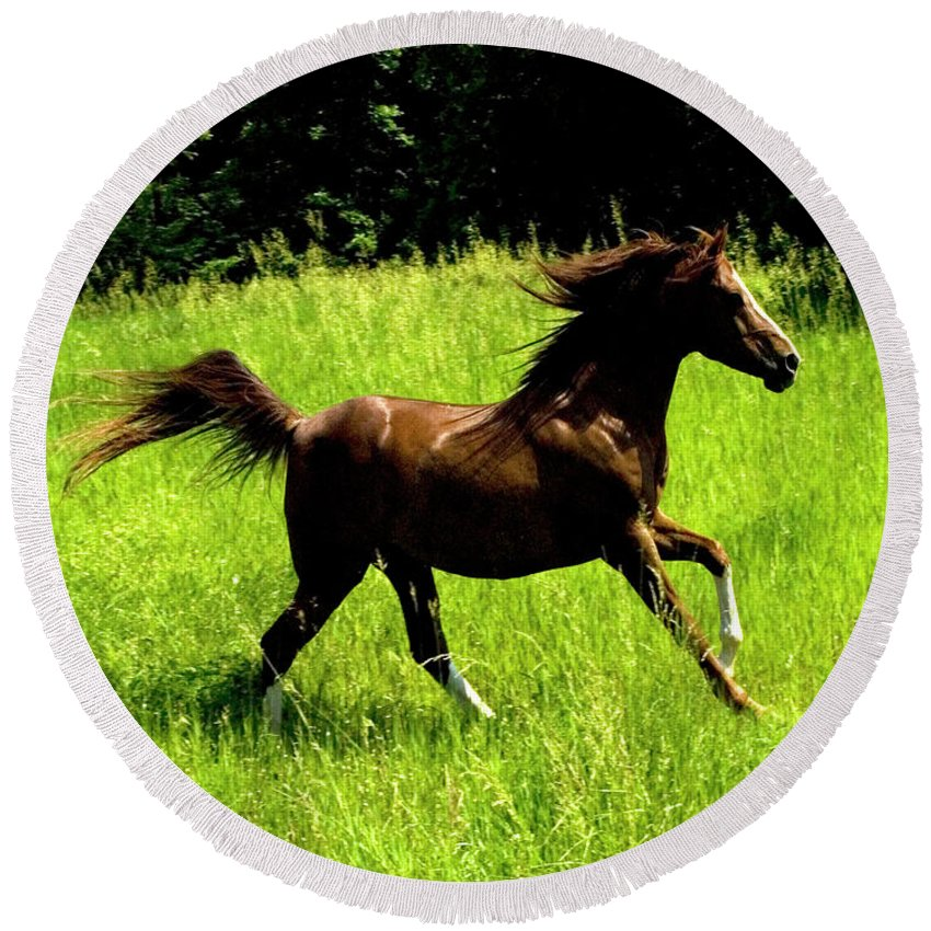 Horse Round Beach Towel featuring the photograph Running Free by Michael Barry