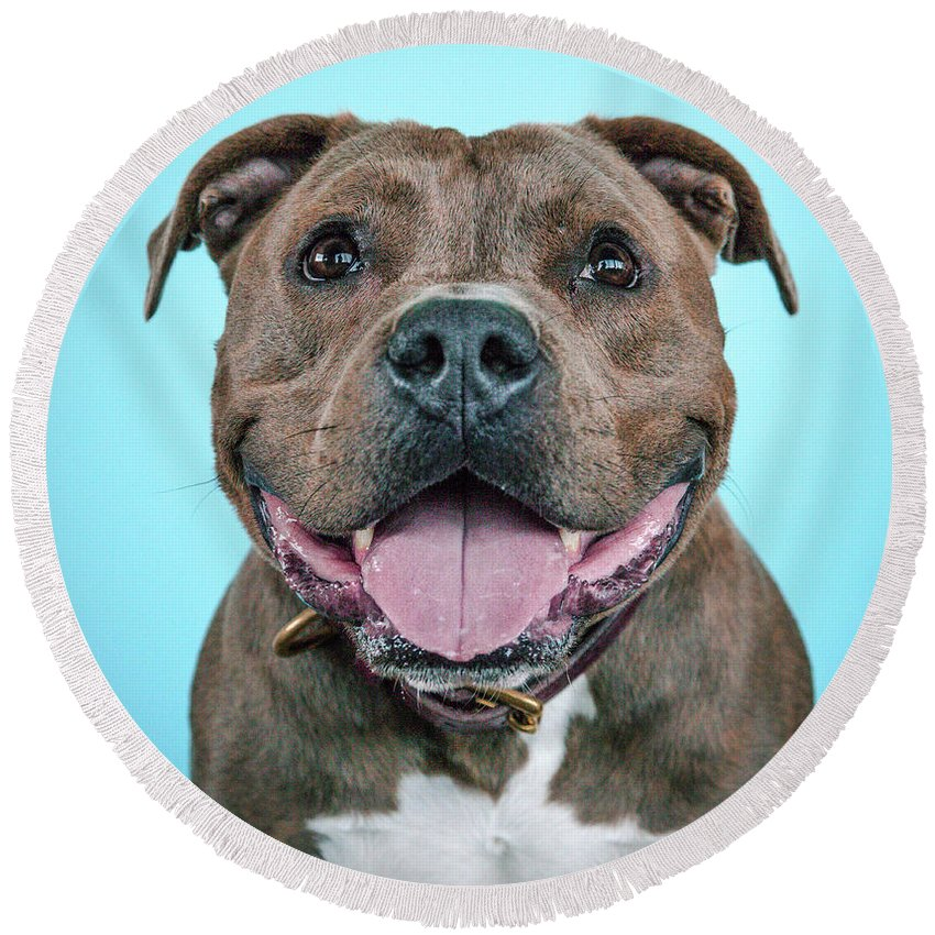 Dog Round Beach Towel featuring the photograph Rusty by Pit Bull Headshots by Headshots Melrose