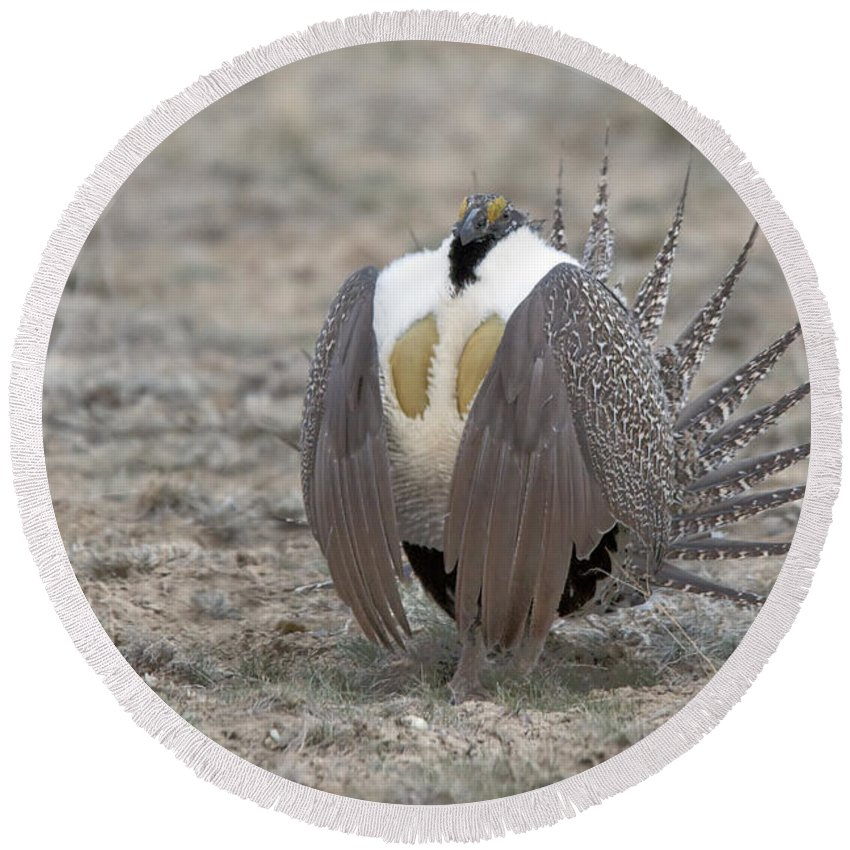 Grouse Round Beach Towel featuring the photograph Sage Grouse by Gary Beeler