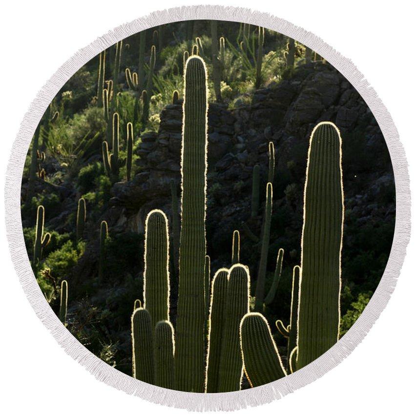 Saguaro Round Beach Towel featuring the photograph Saguaro Cactus Backlit by Jill Reger