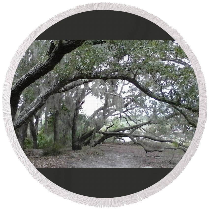 Photos Of Trees Round Beach Towel featuring the photograph Saint Andrews Park Florida by B L Qualls