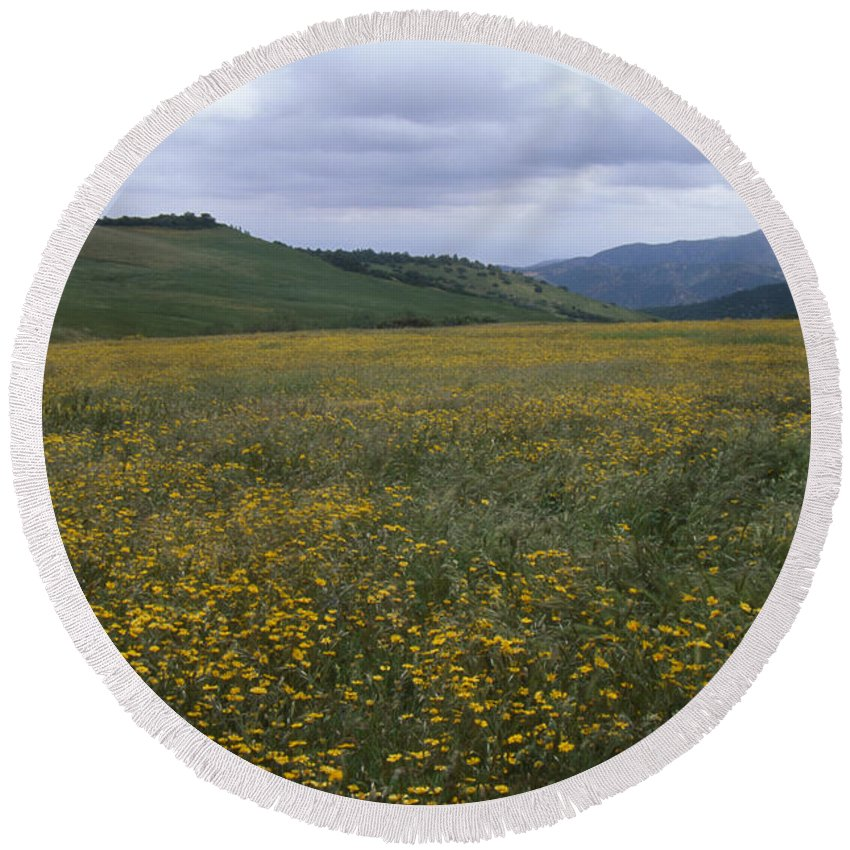 Wildflowers Round Beach Towel featuring the photograph Salisbury Potrero - Sierra Madre Mountains by Soli Deo Gloria Wilderness And Wildlife Photography
