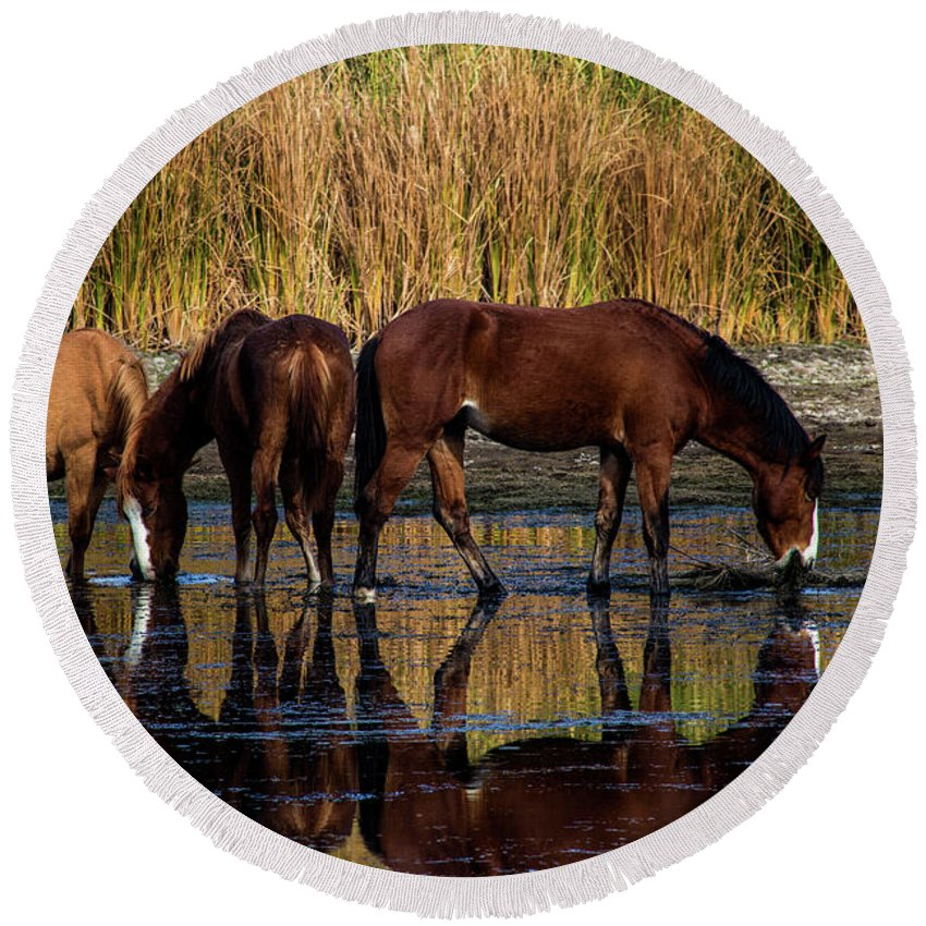 Arizona Round Beach Towel featuring the photograph Salt River Horses by Kathy McClure