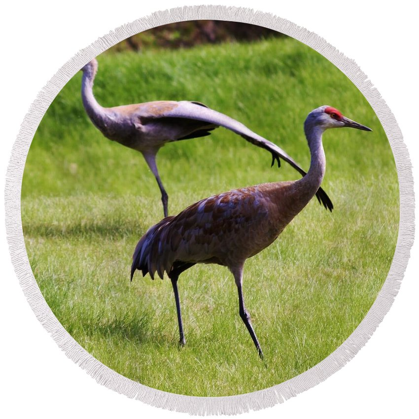 Sand Hill Cranes Of 2 Round Beach Towel featuring the photograph Sand Hill Crane Of 2 by Lori Mahaffey